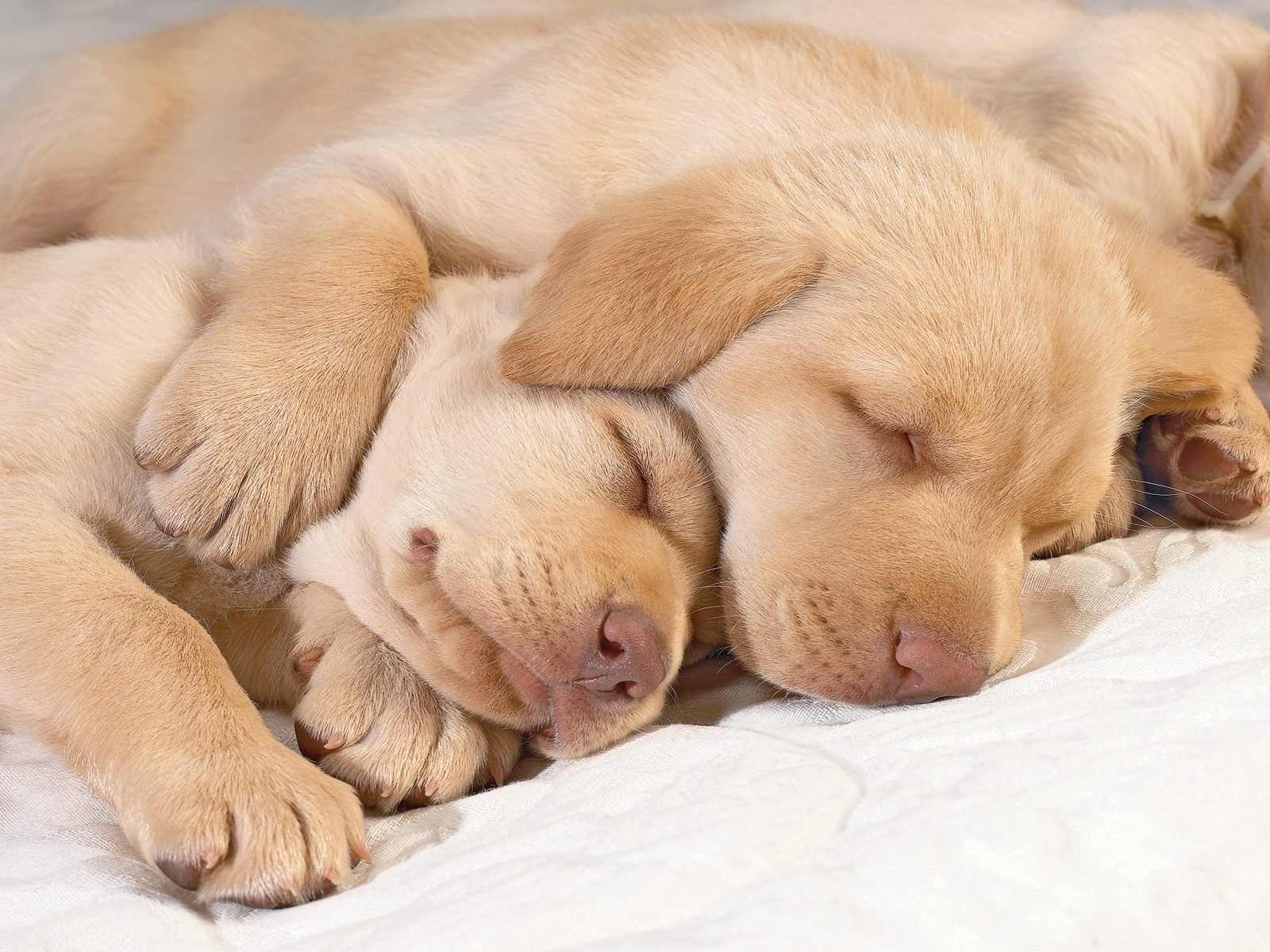 Cute Puppies Sleeping Exactly how much do you love this dude how