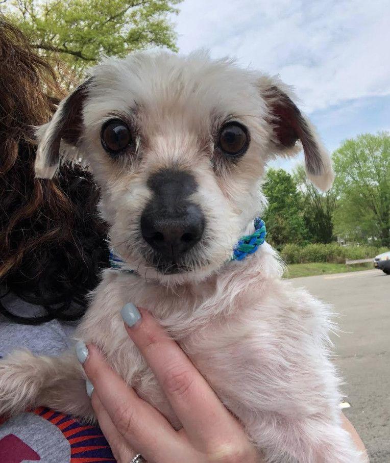 Adopt Dwight on Petfinder Maltese, Maltese dogs, Dog