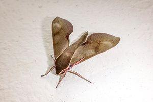 Moth Dream Meaning Interpretation | Dream meanings