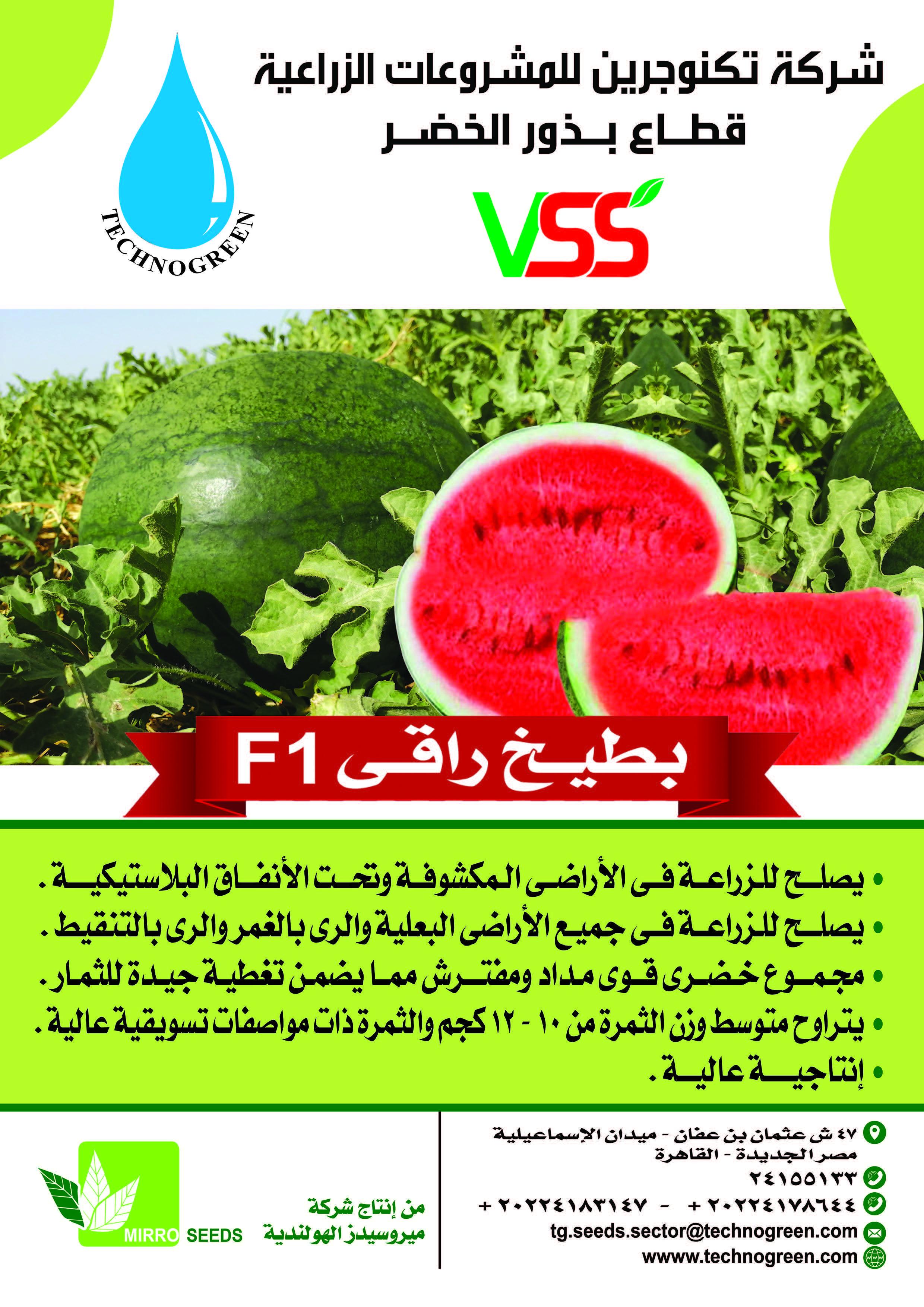 شركات تقاوي وبذور Seeds Watermelon Fruit