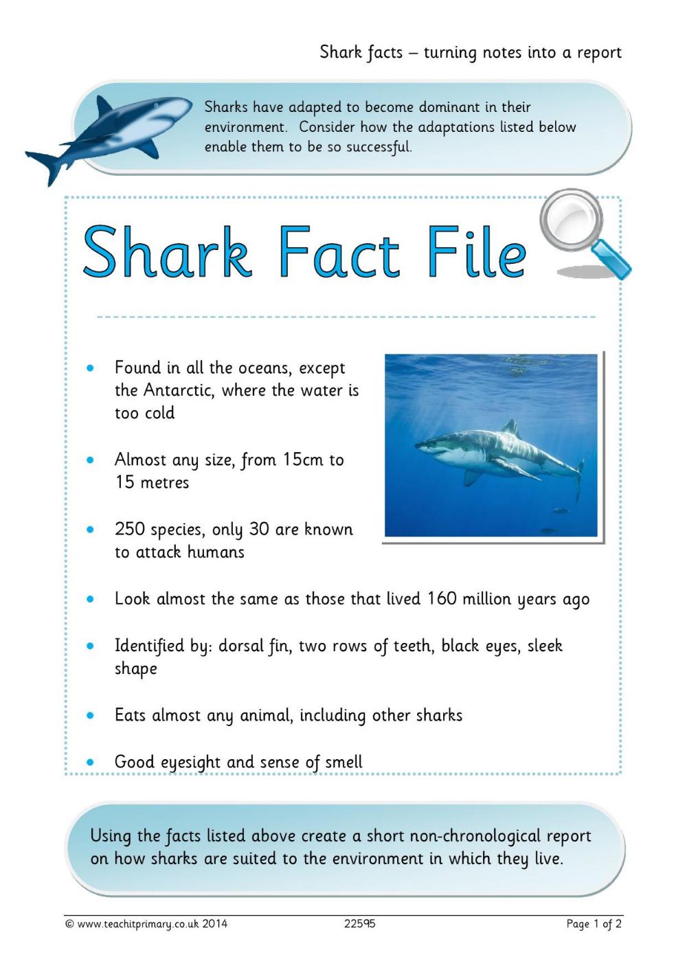 Shark Themed Unit Pdf Google Search Shark Facts Shark Facts [ 1415 x 1000 Pixel ]