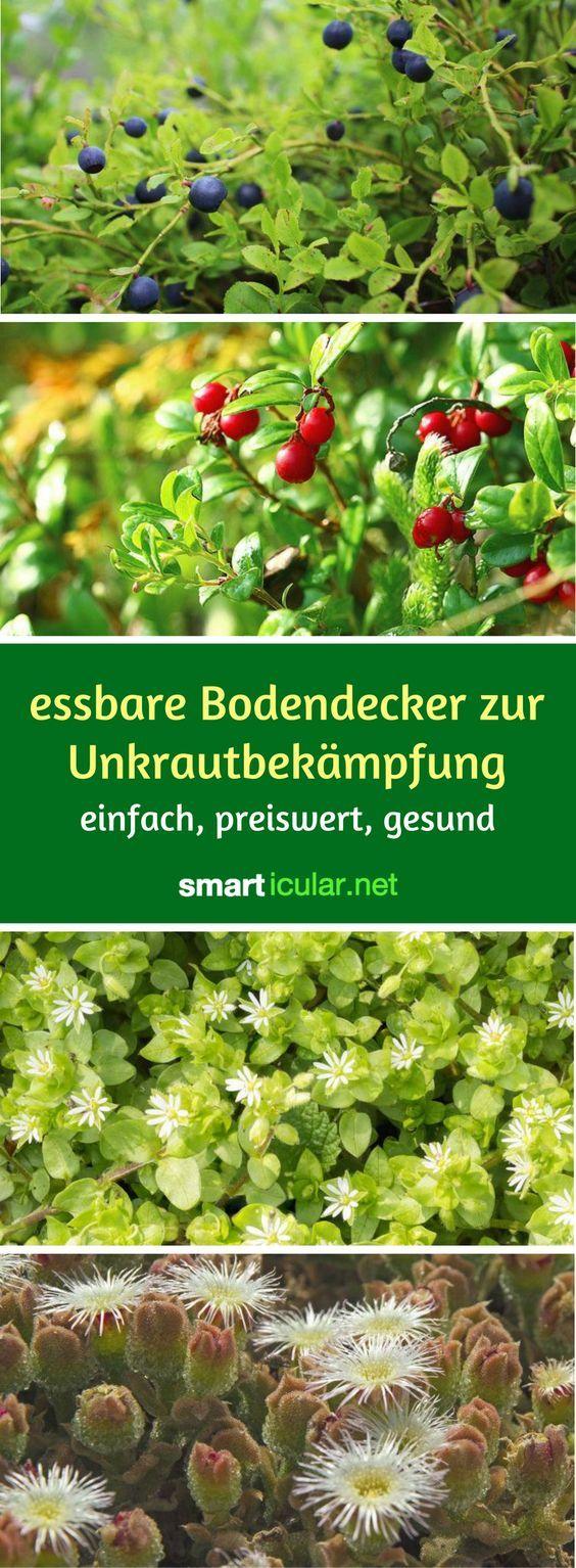 Photo of Ernten statt Jäten: Essbare Bodendecker zur Unkrautbekämpfung
