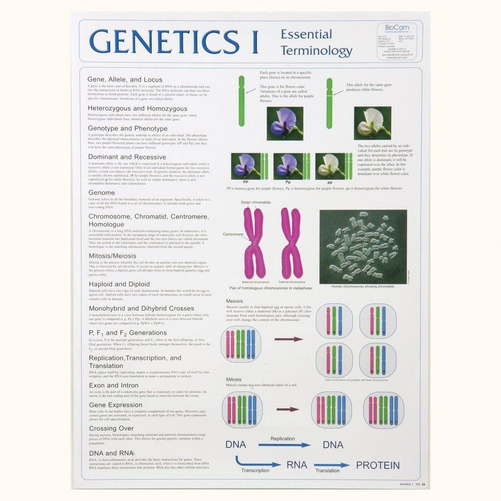 Genetics I Poster Biology Worksheet Biology Interactive Notebook Genetics
