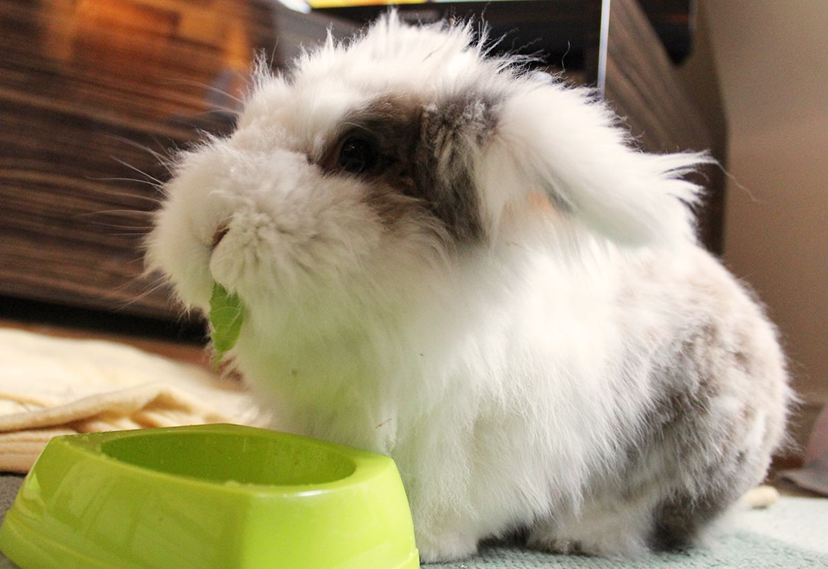 Biscuit & Buddy | Fluffy bunny, Rabbit pictures, Bunny