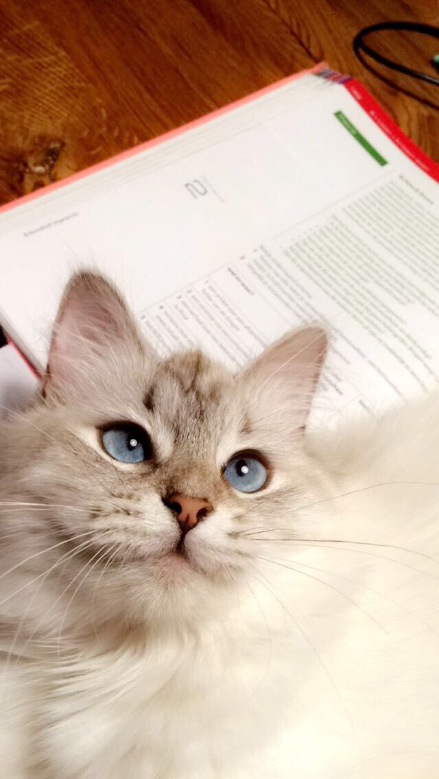 cats with blue eyes ^^