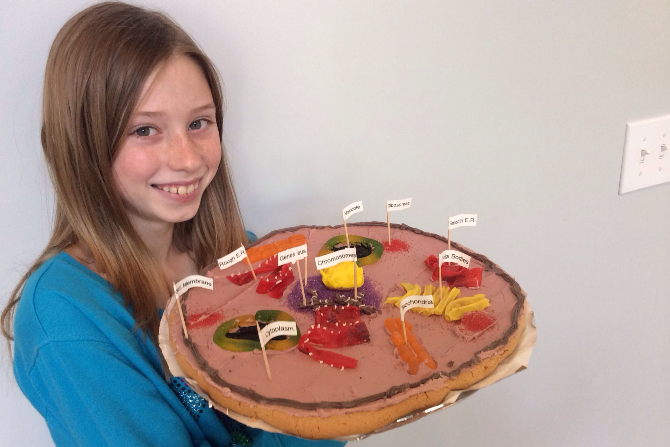 Animal Cell Model (edible) - 5th grade | Projects for kids ...