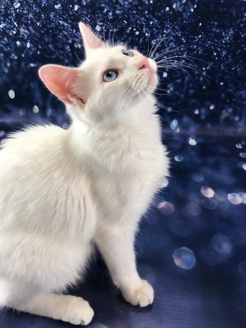 Adopt Kodiak On Cat Adoption Help Homeless Pets Kodiak