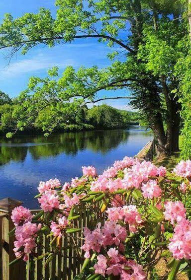 Flores Rosas Paisagens E Poesias Comunidade Google