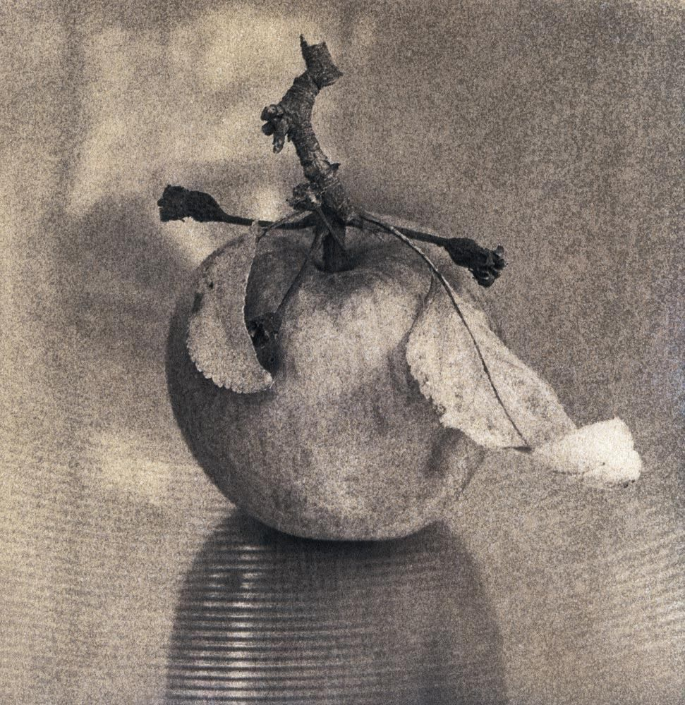 """From Grandma´s Apple Tree to Son´s 16"""" Crash 2011 Gum bichromate six layers on Bergger Cot-320 print negative 27x27 cm by reversal development Planar 100 with extension tubes, Acros in Tanol"""