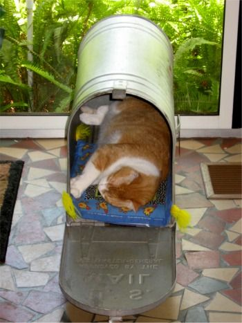 Our big lug of a cat, Chester, sleeping in the newest cat mailbox condo. An old huge mailbox with store bought feet and a catnip magic carpet make it comfy for any resident.