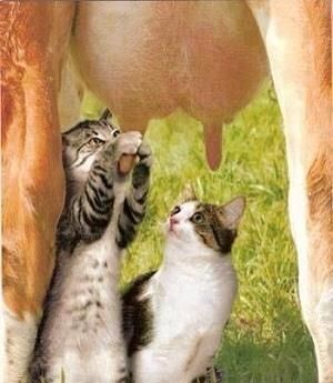 Pull the udder one!