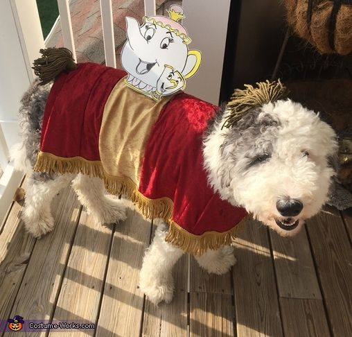 Image Result For Sultan Beauty And The Beast Dog Costume Dog