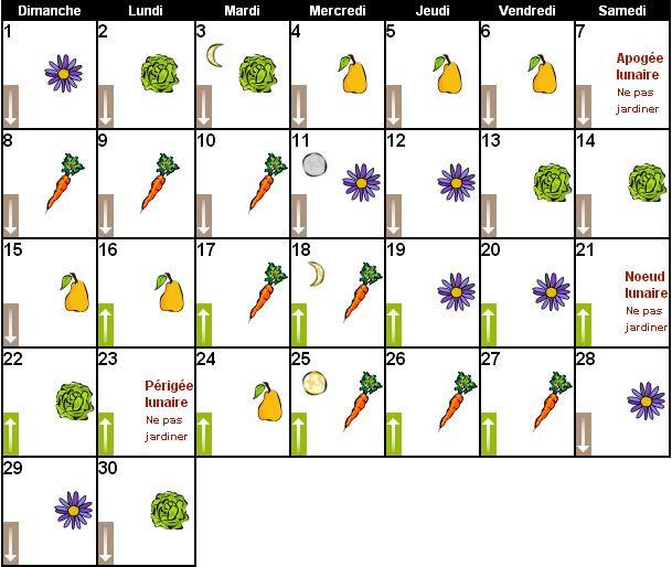Magazine petit jardin n 107 novembre 2015 jardinage - Graines et jardin calendrier lunaire ...