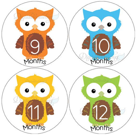 baby month stickers 32 owls monthly by digitaldoodlebug on Etsy, $9.00