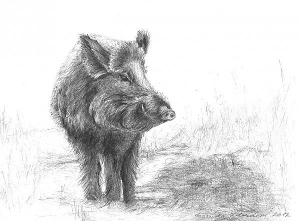 Srnec Kresba Hledat Googlem Wild Boar Drawing Painting Wild