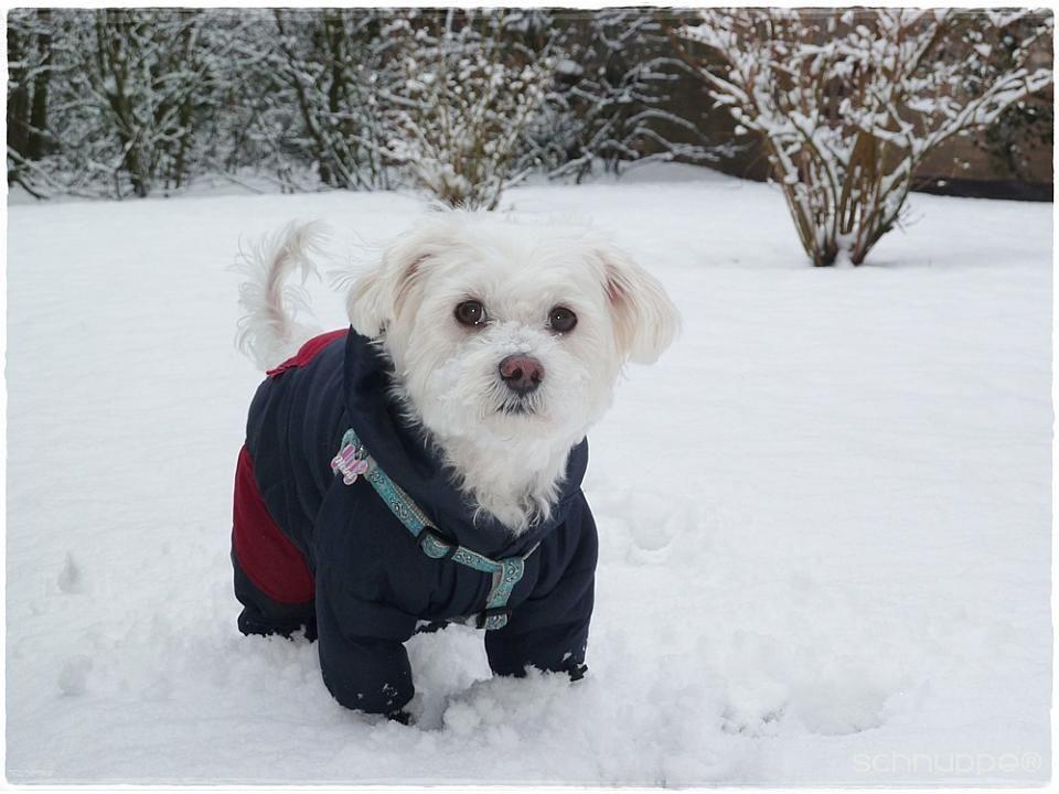 Mir ist im Winter nicht kalt :-)  #Hunde auf #widPet #Tiercommunity