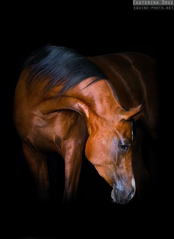 Арабские лошади - Фотографии Лошадей Екатерины Друзь