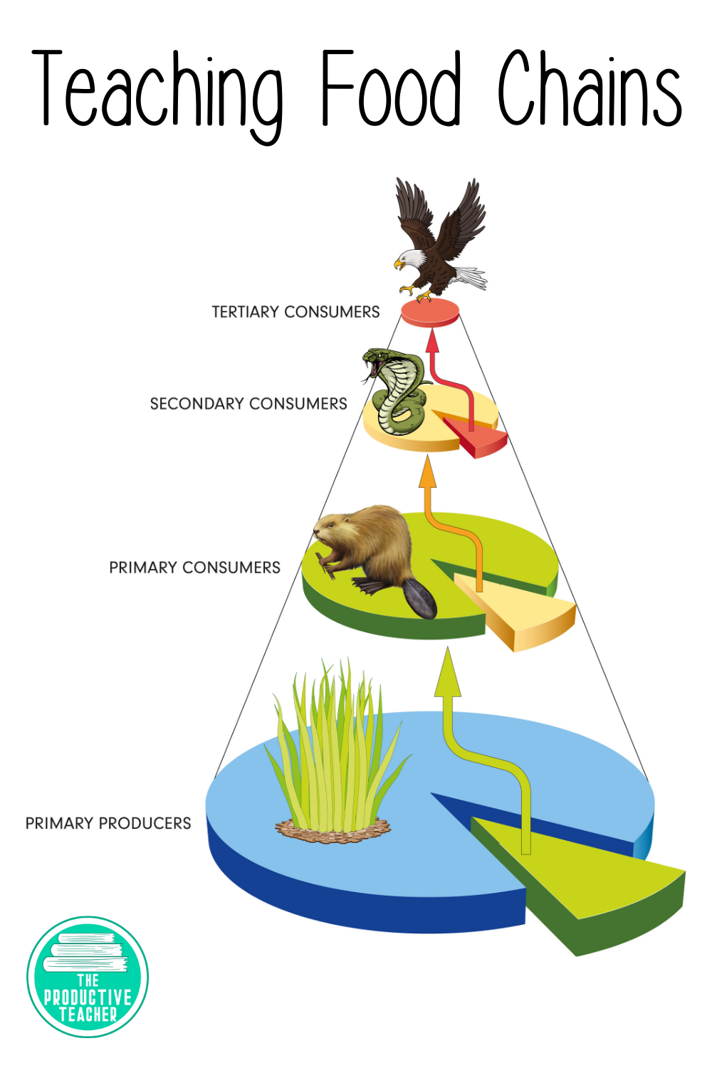 hight resolution of Food Chains