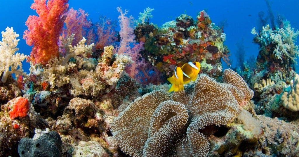 كورال الطبيعة Hd خلفيات وشاشة التوقف صور وخلفية سطح المكتب تحميل مجاني وجميلة المياه المرجانية الطبيعة ثيمات مع Coral Reef Animals Of The World Aquatic Animals