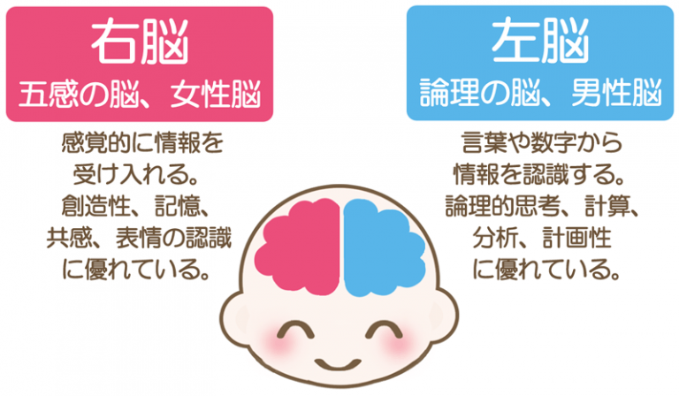 右脳 と 左脳 の 違い