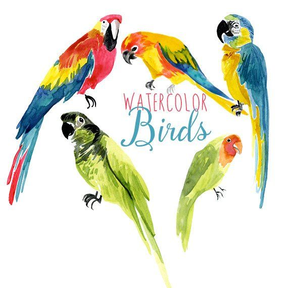 Birds tropical. Watercolor parrot clip art