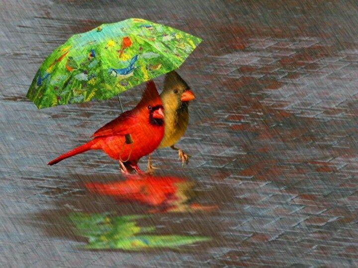 Birds In The Rain Happy Little Birds In The Rain Birds Dancing In The Rain Rain