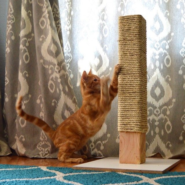Rope Scratching Post Pinterest Sisal Rope Scratching Post And Sisal