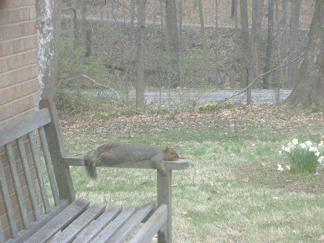 lounging squirrel