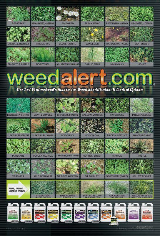 Pin by pamela moen on gardening inside and out weed garden weeds grass also rh pinterest