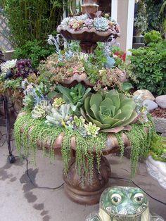 fuente de cactus