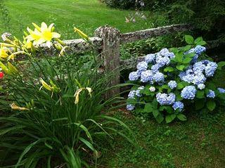 Flowers, Linville North Carolina
