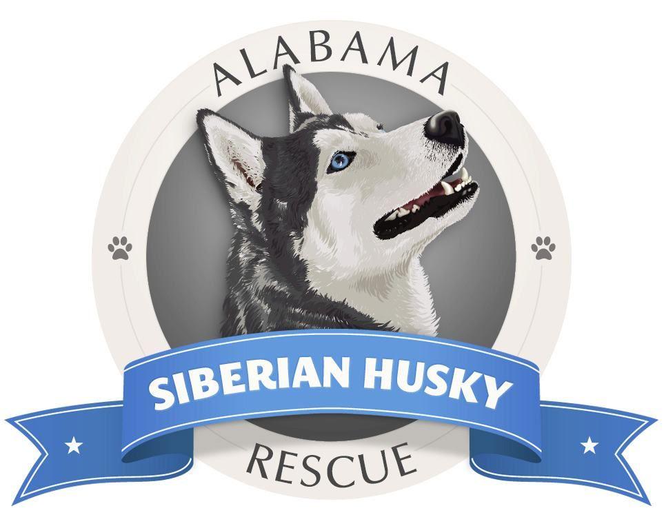 Alabama Siberian Husky Rescue Inc Clay Al Siberian Husky