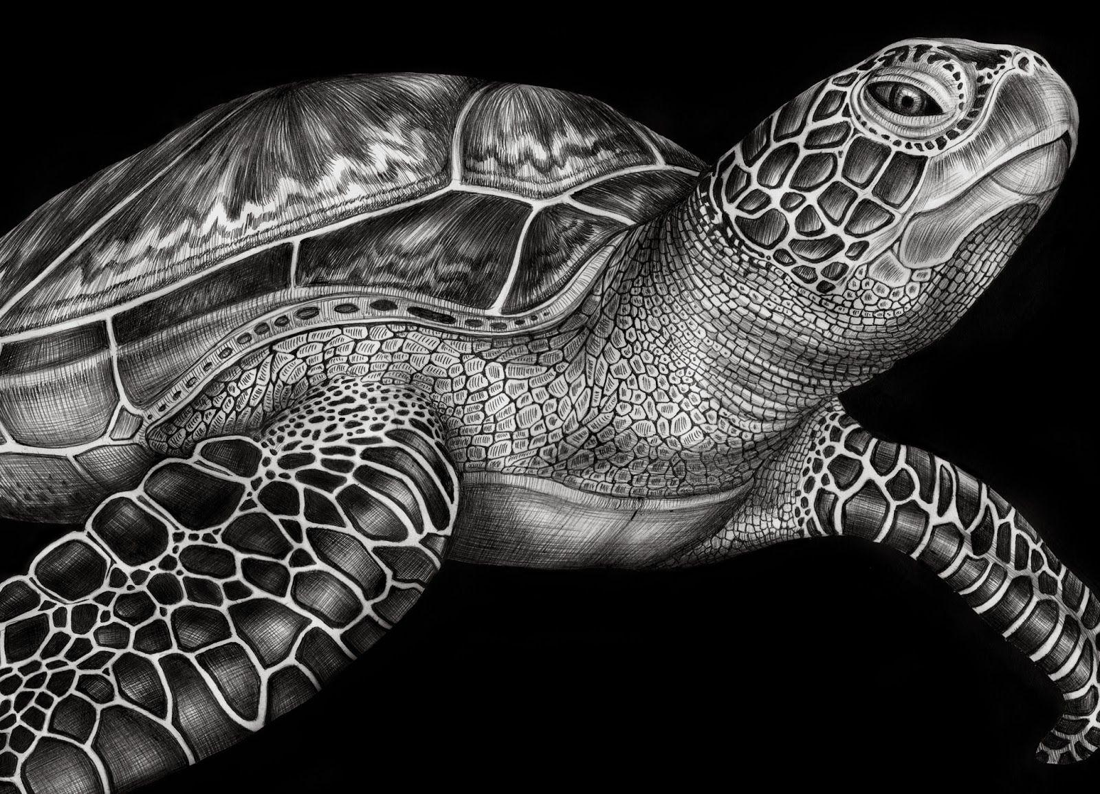 Tim Jeffs Art December 2013 Turtle drawing, Turtle art