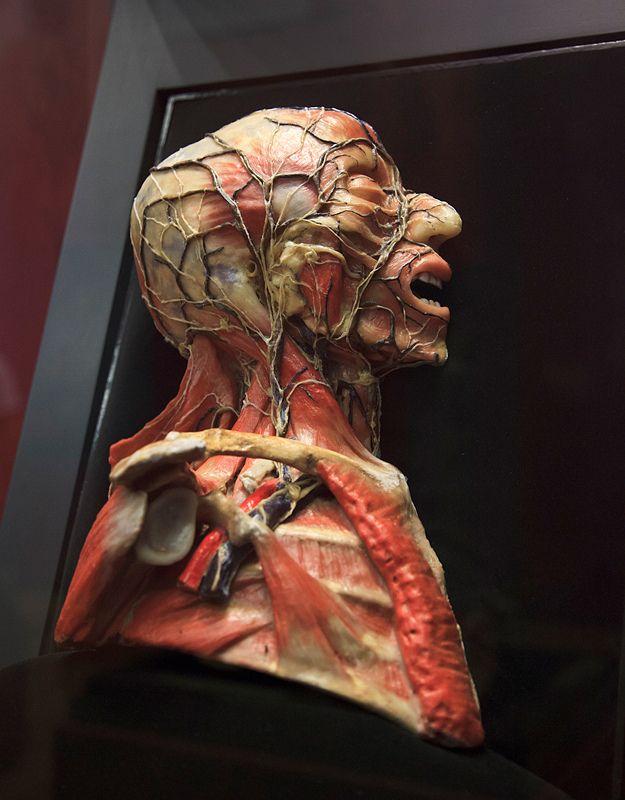 mexicomedmuseum40.jpg | Pinterest | Medicina, Museos y Mexicanos