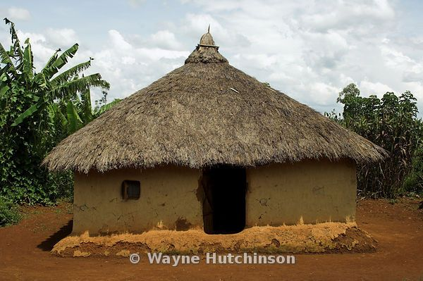 Traditional african mud hut with thatched roof in village kenya africa african vernacular - Traditional houses attic ...