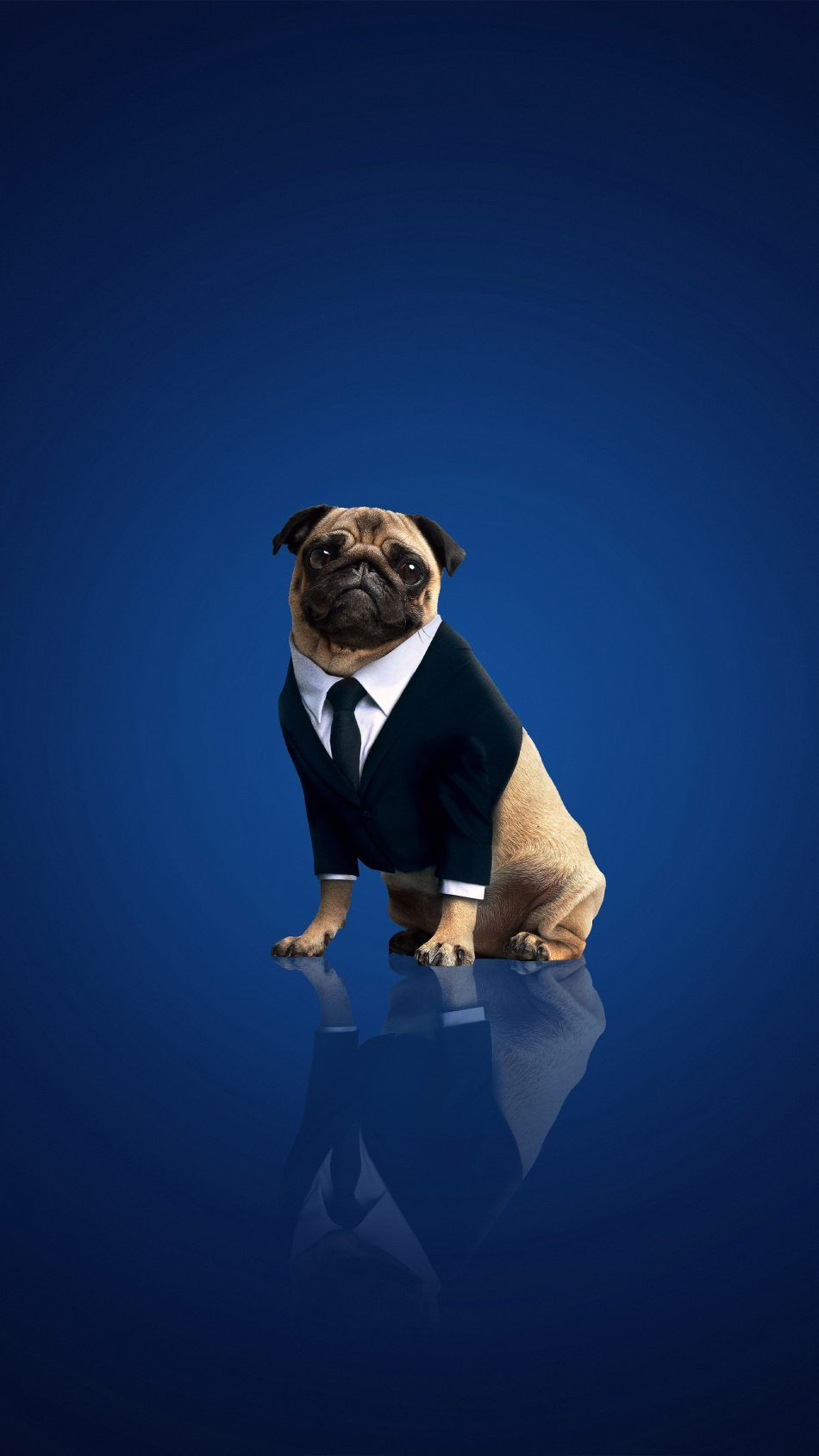 Frank The Pug In Men In Black International Frank The Pug Pugs Family Friendly Dogs