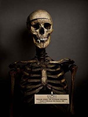 """William Burke  (1792- 1829)  """"Burke's body is to be dissected, and his Skeleton to be preserved, in order that posterity may keep in remembrance his atrocious crimes."""""""