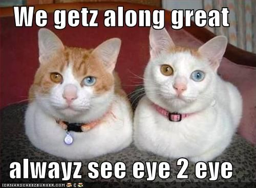 Cats Saying Funny Things Dous Happy Fun Time Blog November 2010