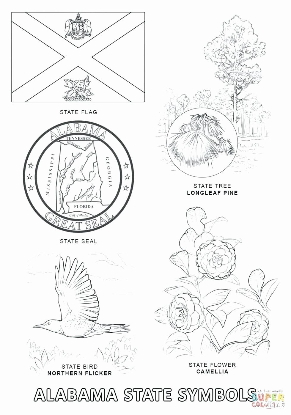 Maine State Flower Coloring Page Elegant Virginia State Flag