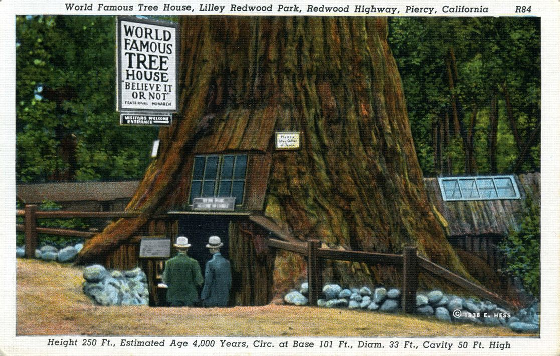 Redwood Tree Ca Page 2 Famous Trees Tree House Redwood Forest