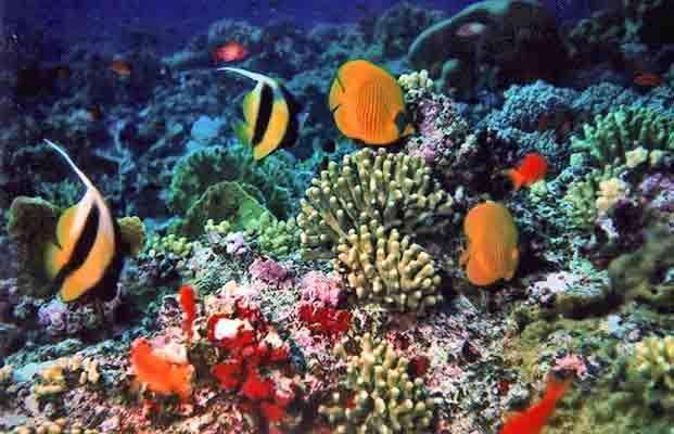 8 giugno. Giornata Mondiale degli Oceani http://www.sorgeniaecopensiero.it/2012/06/11/un-mare-di…-efficienza/