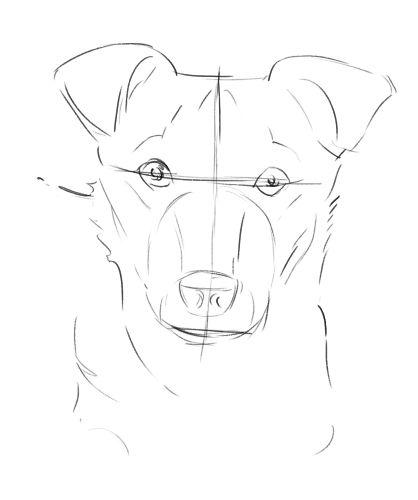 Learn How To Draw Your Dog S Portrait Paveiksliukai Dog Drawing