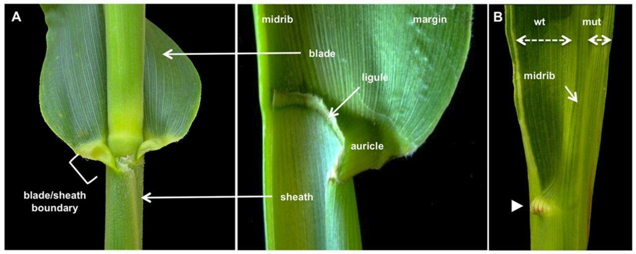Pin By Erika Erika On Edu Plant Anatomy Pinterest Anatomy