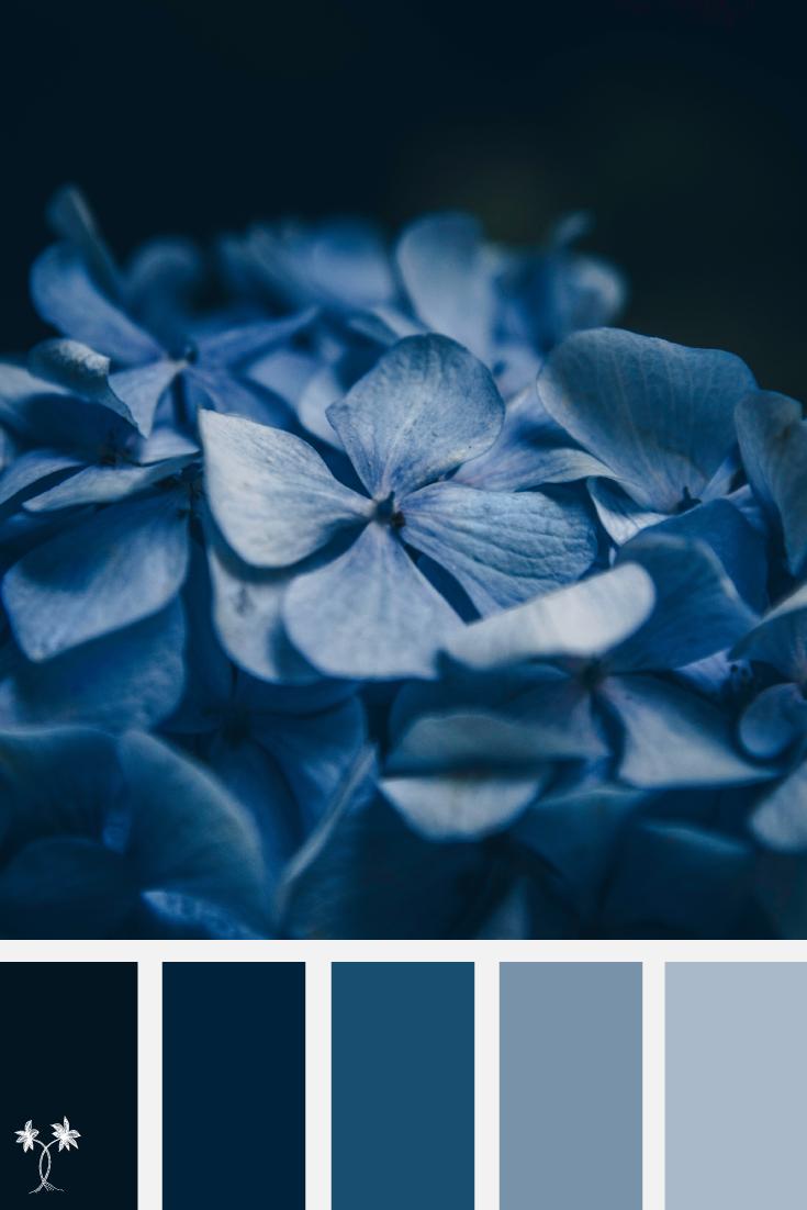 Monochromatic blue color scheme
