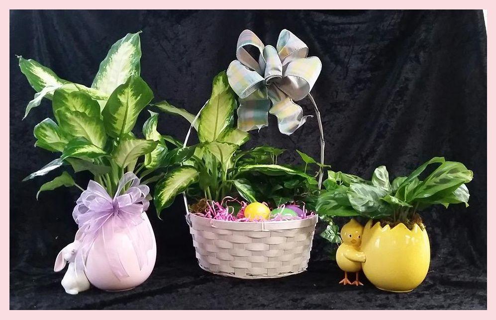 Chattanooga Florist, 1701 E Main St, Chatt, Tn 37404, 423