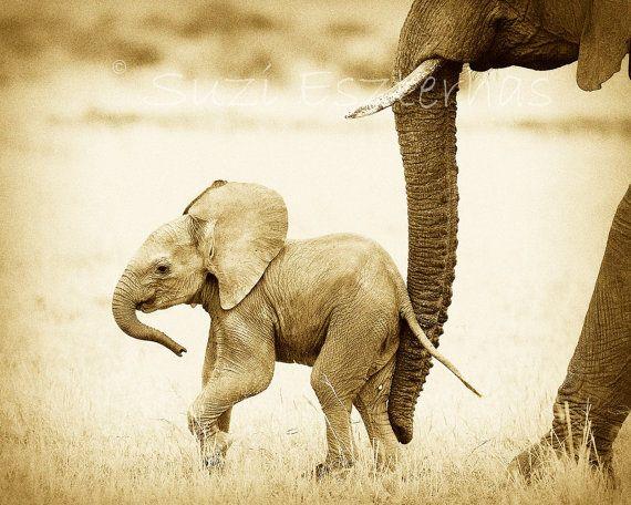 Safari Nursery Decor, BABY ELEPHANT PHOTO, 8 X 10 Sepia Print, Baby Animal Photography, Wildlife Photograph, Wall Art, African, Zoo,Vintage