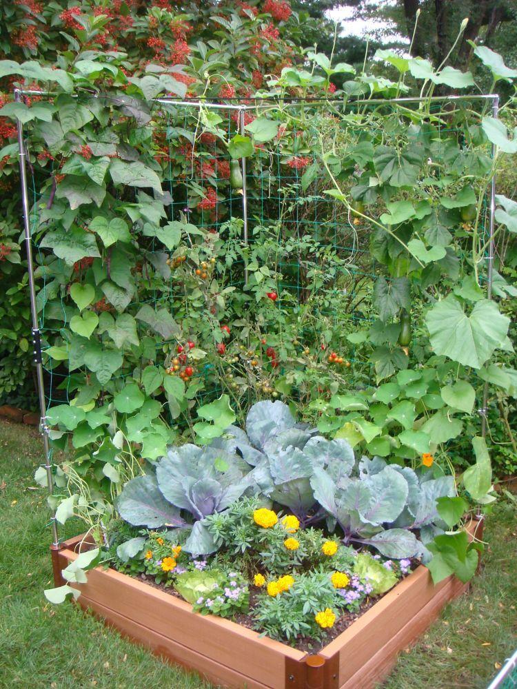 Veggie Wall Trellis Kit Jardinage urbain, Parement mural