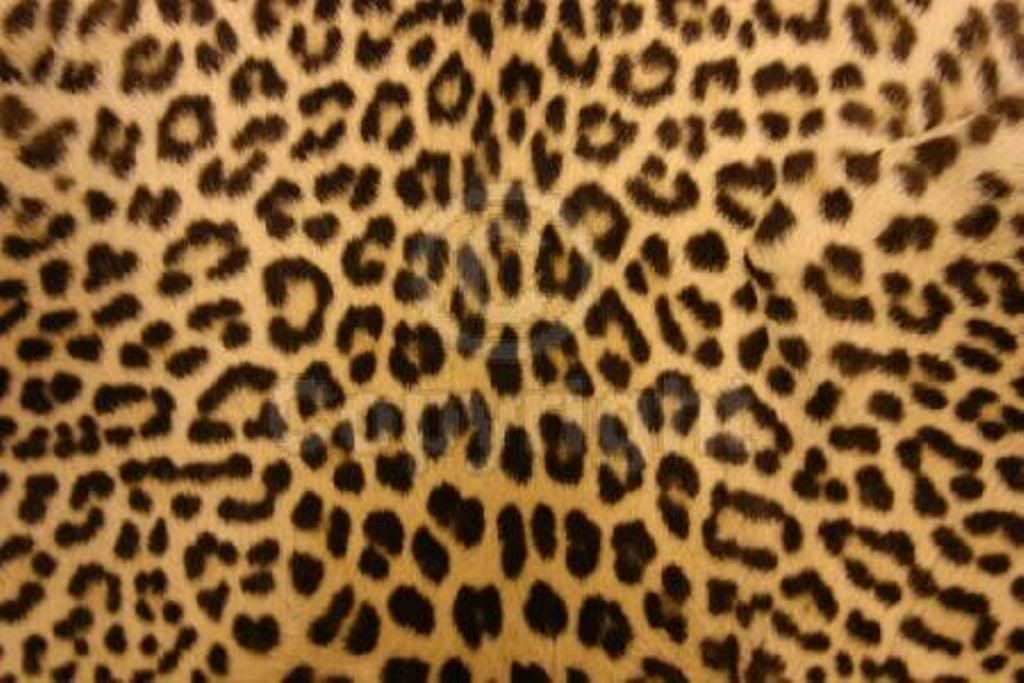 Animal Print Desktop Backgrounds Wallpaper Leopard Print Wallpaper Cheetah Print Wallpaper Cheetah Print Background