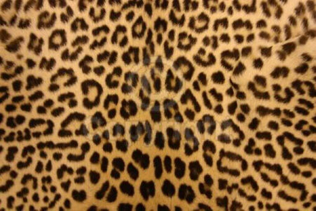 Animal Print Desktop Backgrounds Wallpaper Cave Leopard Print Wallpaper Cheetah Print Wallpaper Leopard Print Background Wallpaper