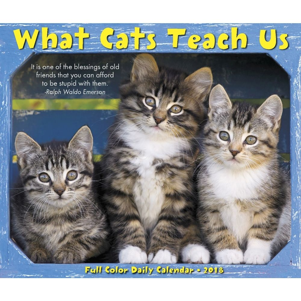 2019 What Cats Teach Us 2019 Desk Calendar Free Shipping On